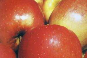 Obst und Beerenobst von Baumschulen Gindler