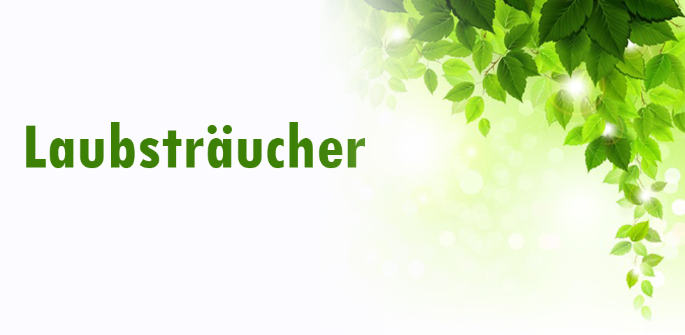 Laubsträucher